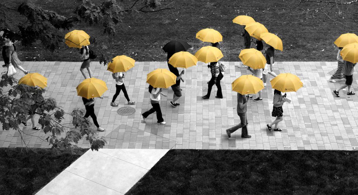 անձրևանոցների վարձույթ