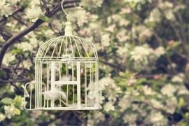 Թռչունը վանդակի մեջ