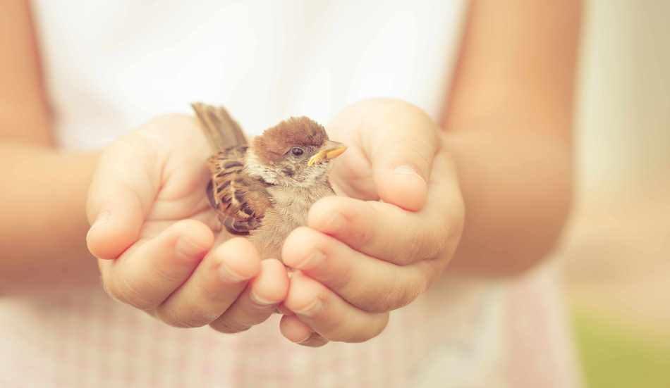 Փոքրիկ բարի գործեր